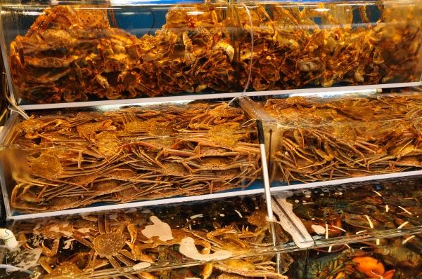 Busan Fish Market-1