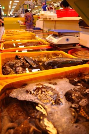 Busan Fish Market-5