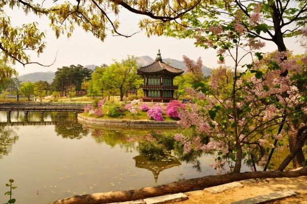 Gyeongbukgung in Spring